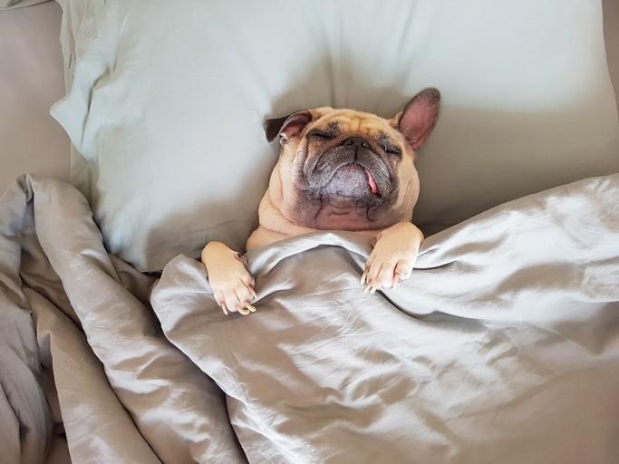 在週末睡覺健康嗎?